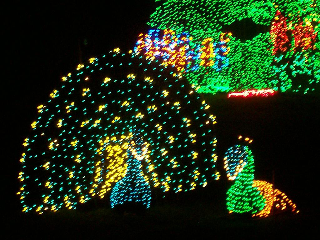 Bellevue for Bellevue botanical garden lights