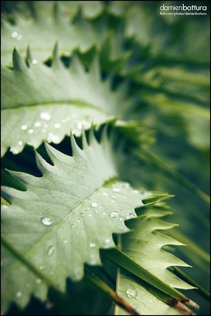 Botanical session 02 saint jean de luz france - Jardin botanique littoral paul jovet ...