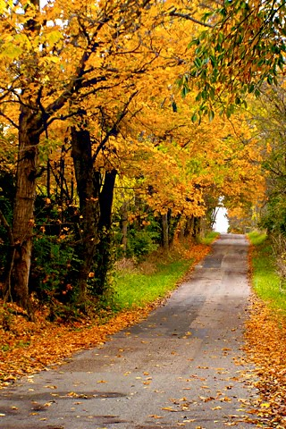 Iphone wallpaper fall road a country road lined on both s flickr - Beautiful country iphone backgrounds ...