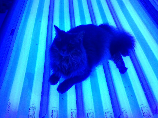 Tanning Beds In Chester Va