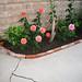 Brick lined garden planter