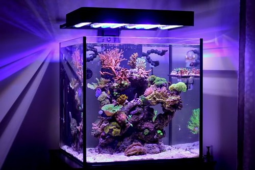 An Updated Cube Tank Photo Flickr Photo Sharing