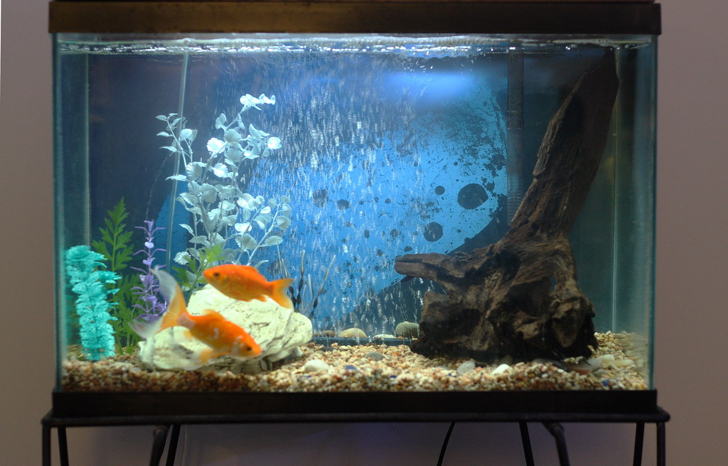 My 20 gallon goldfish tank my brother said one of his for Two gallon fish tank