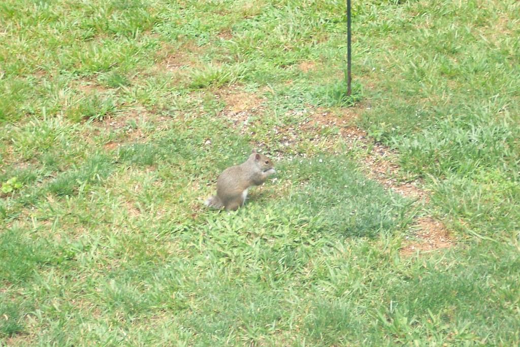 N.c. Squirrel Season Squirrel hunting somet...