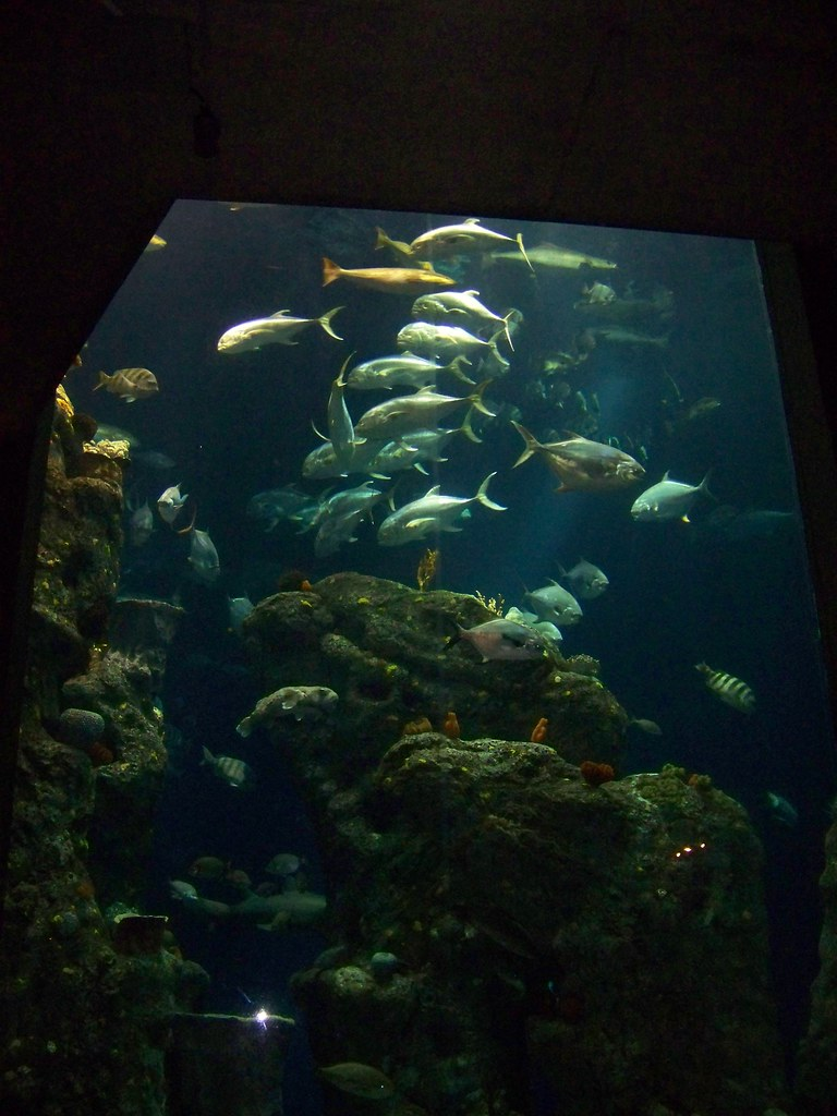 Visit To The South Carolina Aquarium Charleston South Ca