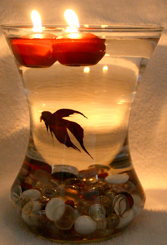 Beta fish bowl wedding reception centerpiece i have for Floating plants for betta fish