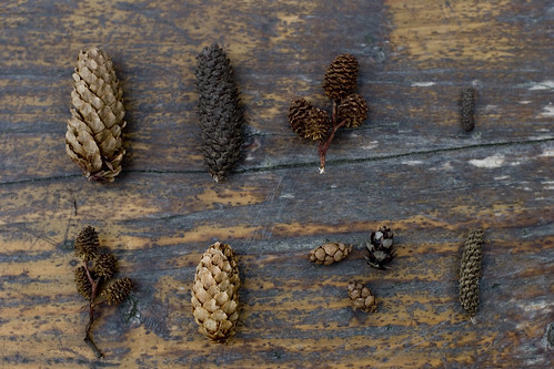 a pinecone collection | by unruly things