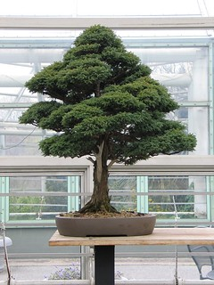 Bonsai Museum | by Brooklyn Botanic Garden