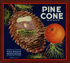 Pine Cone Brand: Grown and packed by Gold Buckle Association, East Highlands, California, grown in U.S.A. | by Boston Public Library