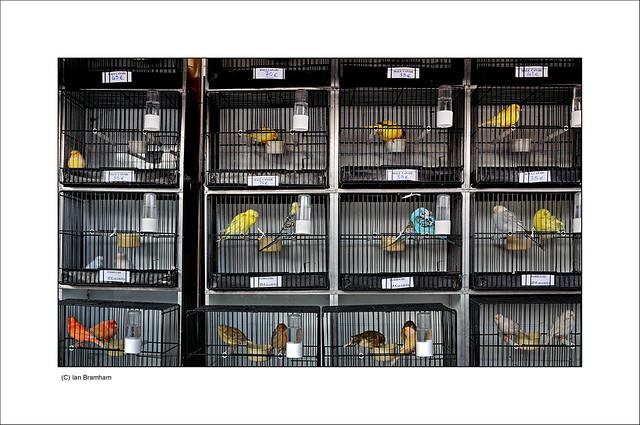 quai de la m gisserie paris view on black the bird and pe flickr. Black Bedroom Furniture Sets. Home Design Ideas