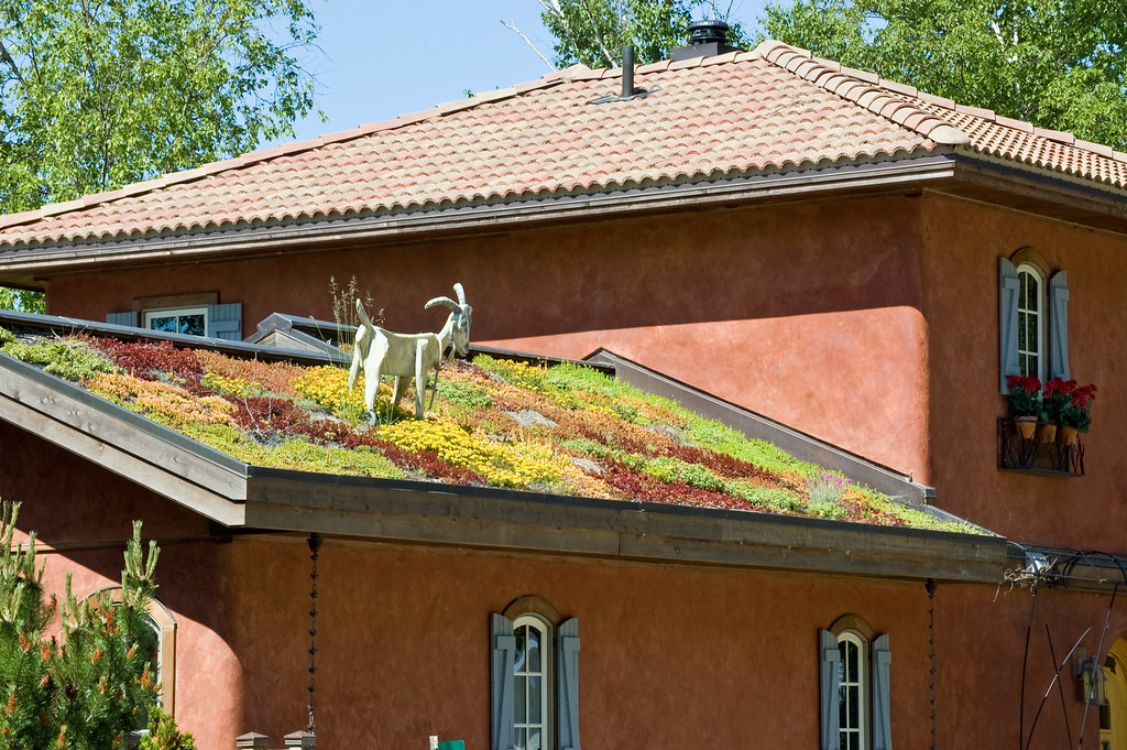 Live Roof Real With Goat Not Real This House On