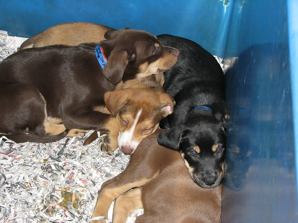 Puppies For Adoption In Long Beach Caticketmaster Long Beach Ca