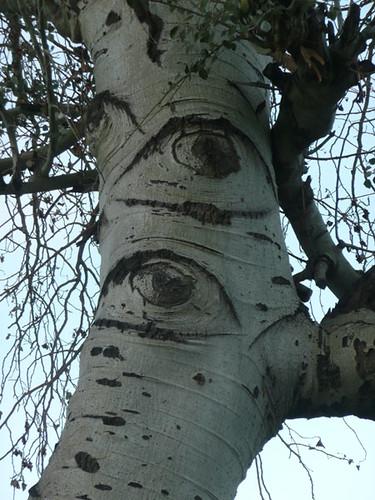 el árbol de ojos ...