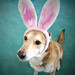 031/365: my easter bunny