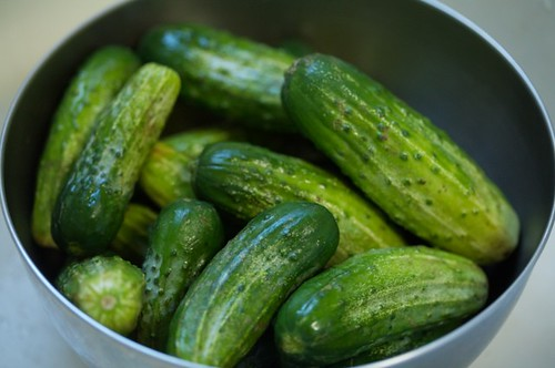 Pickling cucumbers | by Elise Bauer