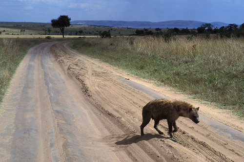Hyena crosses a desolate road | by World Bank Photo Collection