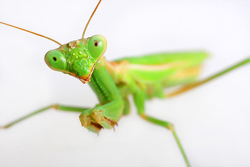 Mantis Model | by LVshooter