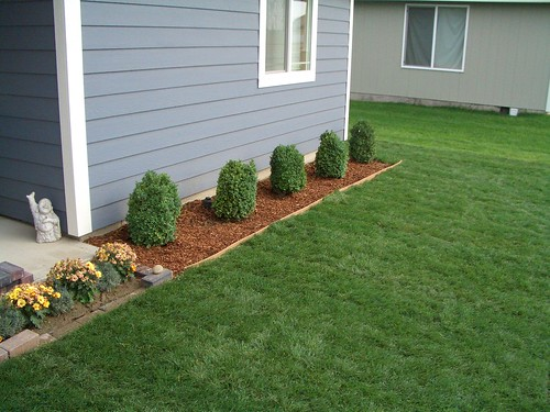 Boxwood Shrubs In Front Of House Flickr Photo Sharing