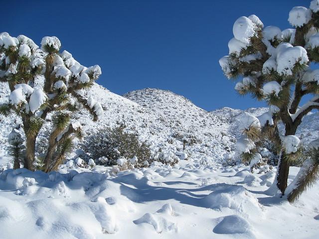 joshua tree snow covered flickr photo sharing