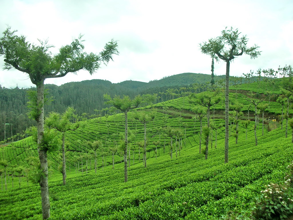 United Nilgiri Tea Estates Company Ltd.