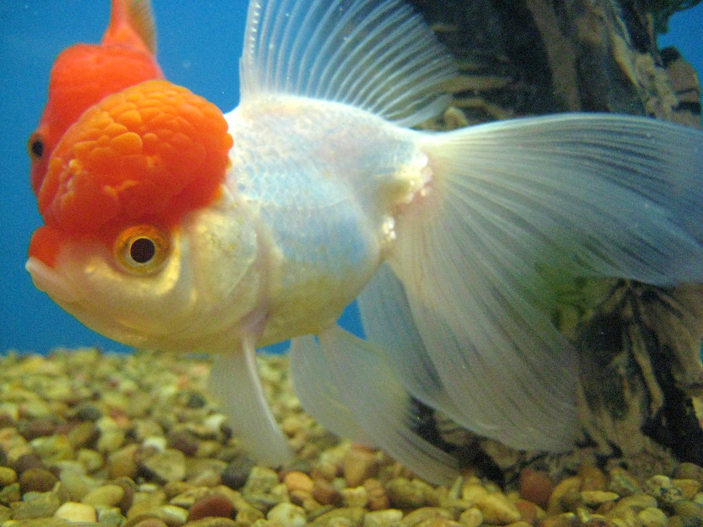 fish brain - photo #4