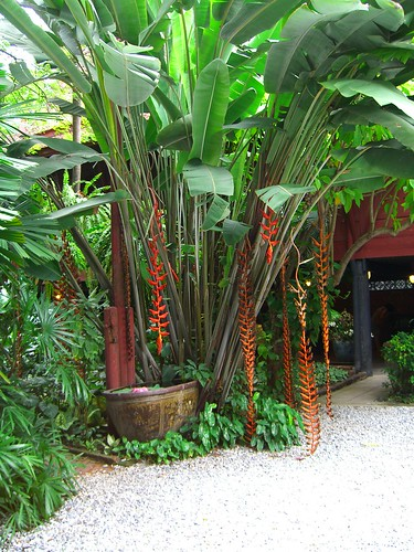 Tropical garden courtyard flickr photo sharing for Tropical courtyard garden design