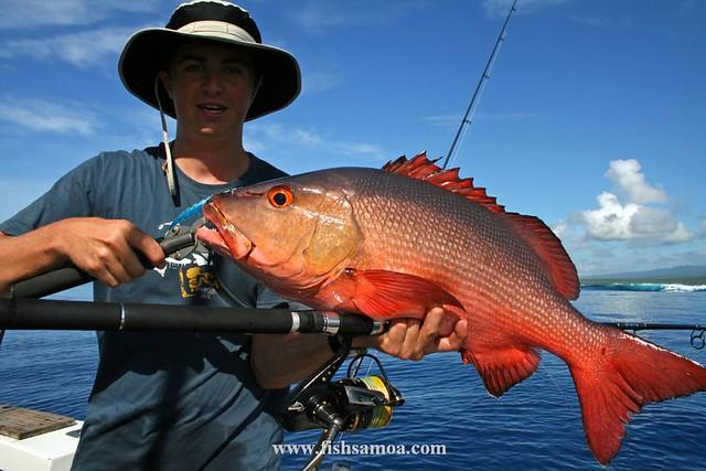 "Popped Red Bass using Shimano ""Spheros"" - Troppo Samoa ..."