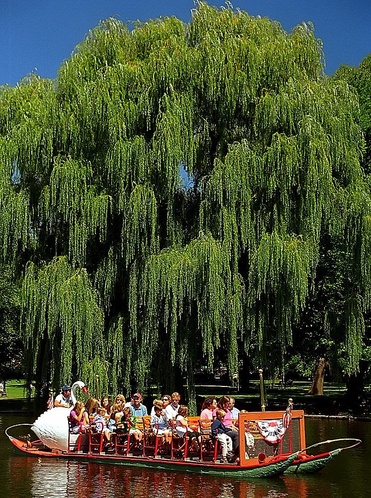 Boston public gardens swan boat weeping willow tree flickr Boston public garden map