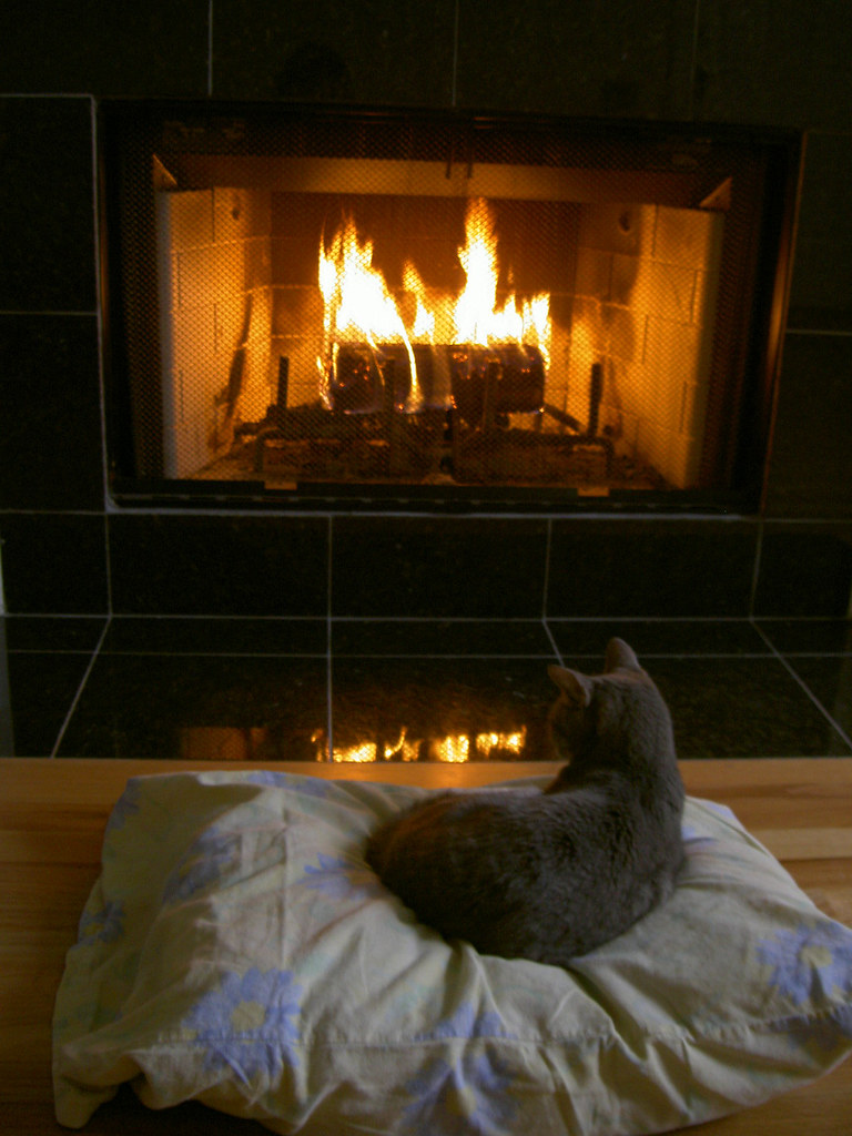 Cat Sitting By The Fire My Darling Little Rosa Here