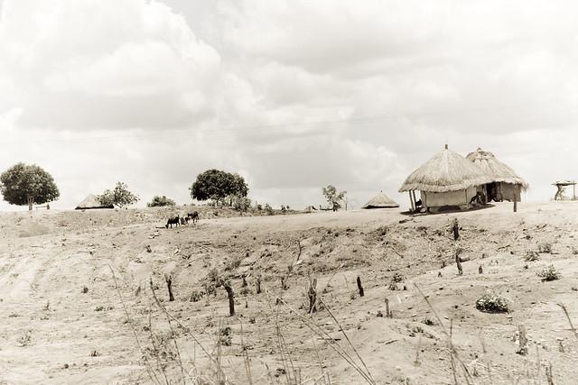 deforestation is necessary for development essay