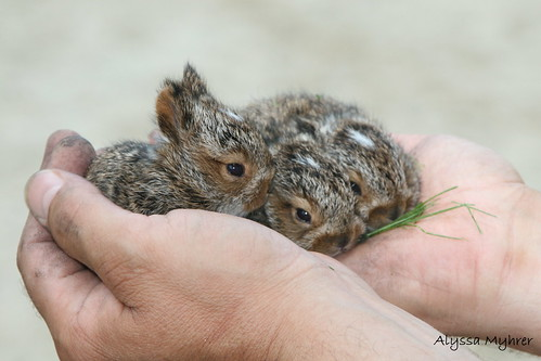 baby rabbits in hands | by amyhrer
