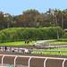 Santa Anita Track