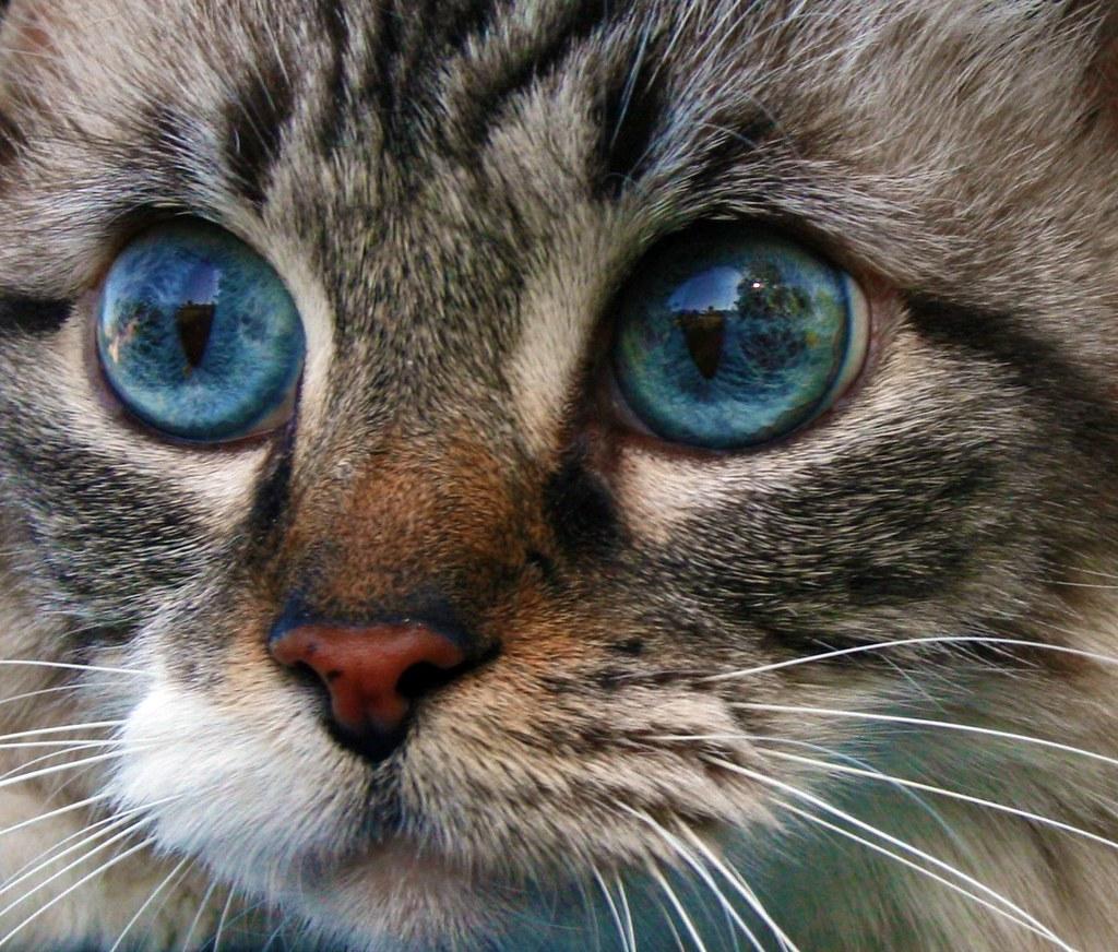 Prettiest Cat Eyes