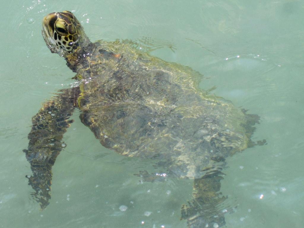 Turtle Island Map Mekong Delta Vietnam