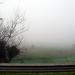 Día de niebla 01