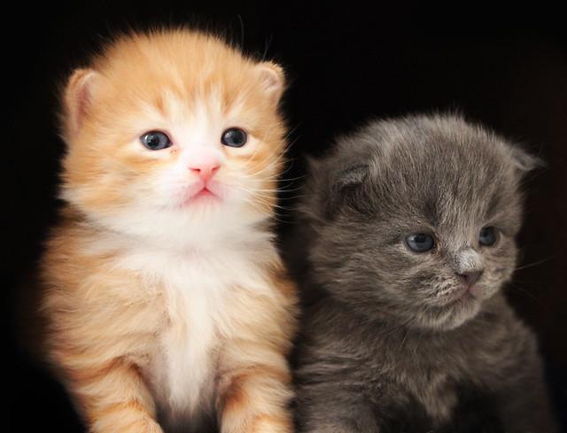 The Best Kitten Cat