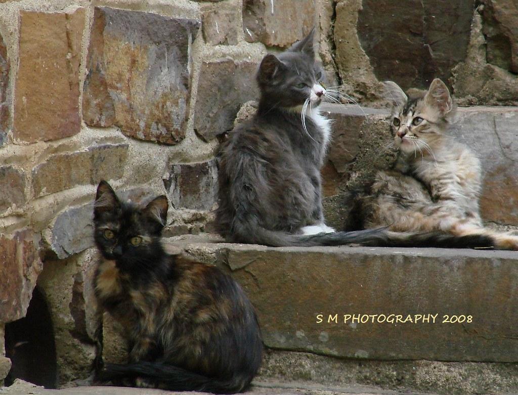 Special Ones Cat Rescue