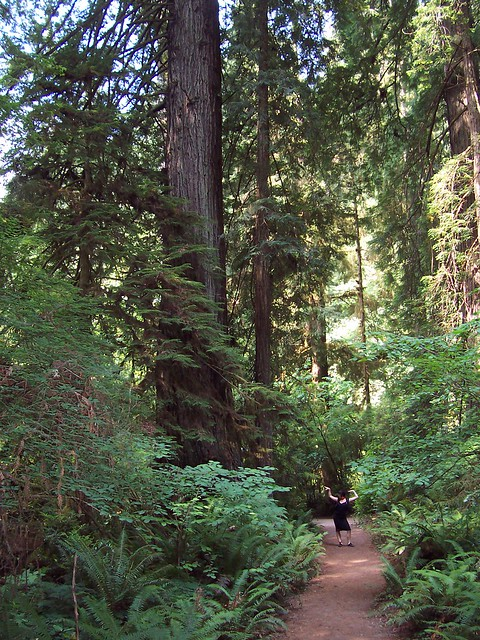 Landscaping With Redwood Trees : World map app garden camera finder the weekly flickr