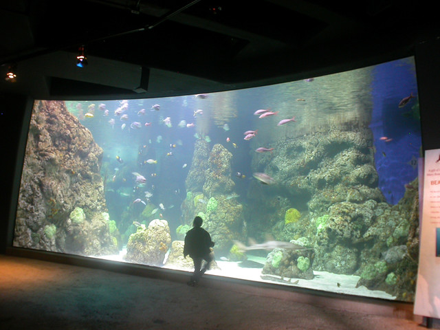 Downtown Denver Aquarium Coral Tank David Manwarren