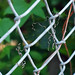Dried Vine Tendrils on a Fence