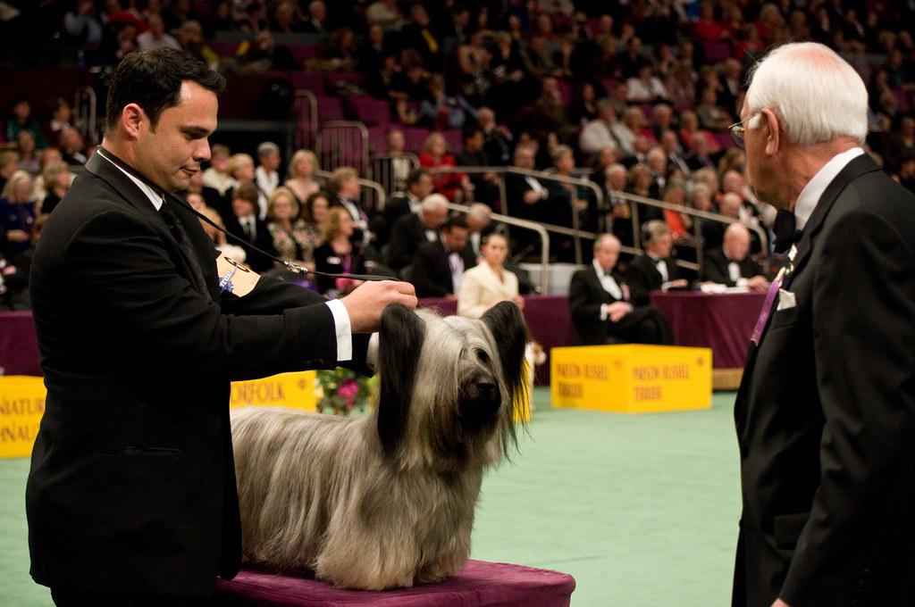 Monday Westminster Dog Show