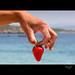 -Frutti di Mare- Sardegna-