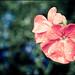 I dont' like shooting flowers ;-)