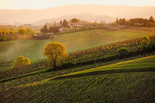 Italy - Tuscanny: Tuscan Vinyards | by Nomadic Vision Photography