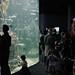 steinhart acquarium