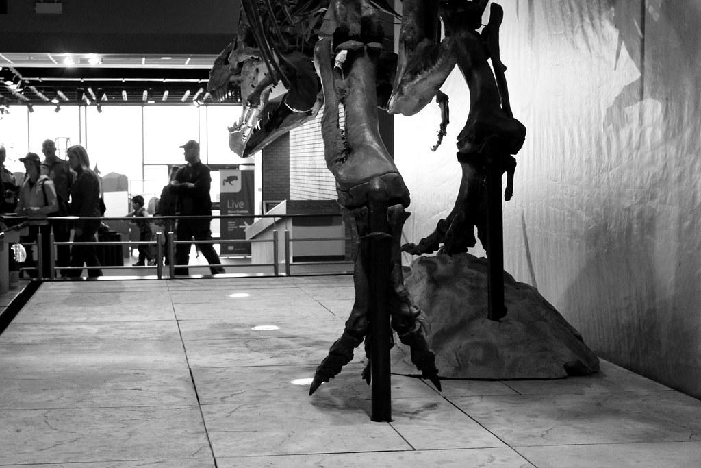 Nova Scotia Museum of Natural History, Halifax: Hours, Address, Nova Scotia Museum of Natural History Reviews: 4/54/4().