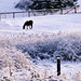 Horse Searching for Grass in the Snow