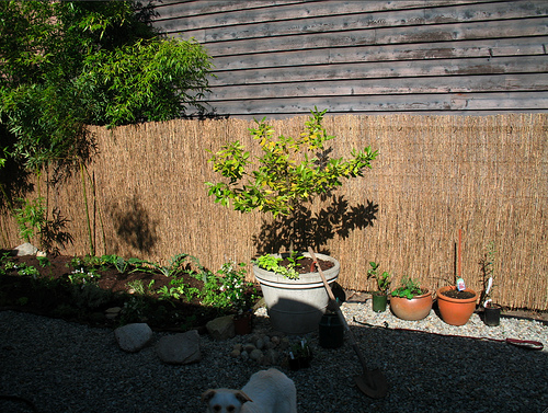 Garden Having Covered The Chain Link Fence With Bamboo