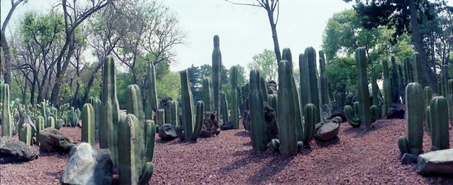 Cactusario jard n bot nico juan felipe rubio flickr for Jardin botanico san felipe