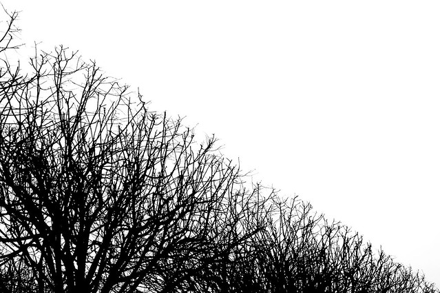 Creatividad con criterio, blanco y negro, ramas.